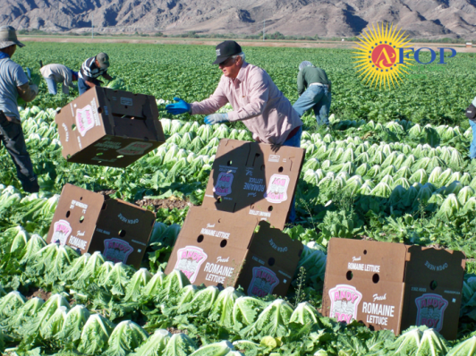 Farmworkers work quickly, often without rest or proper bathroom facilities